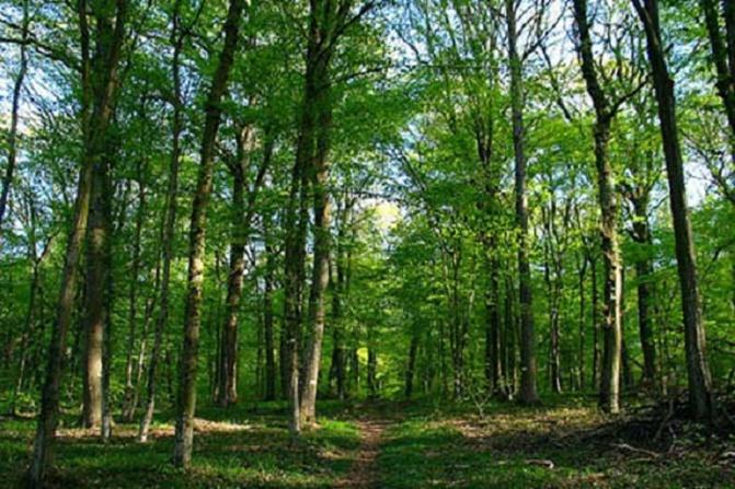 Kolda: Le sous-préfet suspend les constructions dans la forêt classée de Mahon