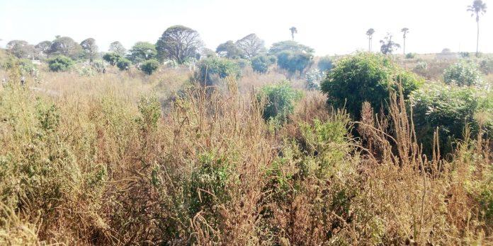 Urgent – Le cimetière de Soumbédioune prend feu ! Voici les images…