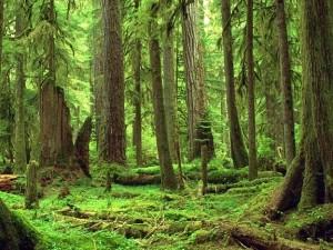 Escroquerie portant sur 49 850 000 F Cfa : le maire de Chérif Lô vend une forêt classée à un marabout