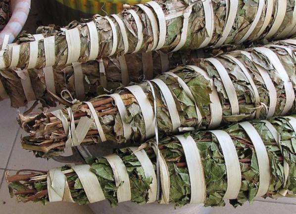 Les vertus du Sekhew (kinkéliba) boisson remède à de nombreux maux