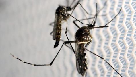 La Guinée-Bissau, deuxième pays d'Afrique touché par Zika après le Cap-Vert