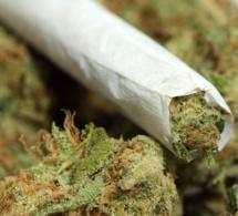 Suisse: Un convoyeur sénégalais interpellé avec 2.5 kg de marijuana