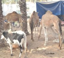 MAGAL TOUBA chez Serigne Cheikh Saliou.