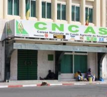 80 milliards FCFA dans le vent: Cncas, sur les traces d'un ignoble scandale