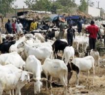 Marchés à bétail sénégalais: Les prix du mouton flambent à l'approche de l'Aïd El Kébir