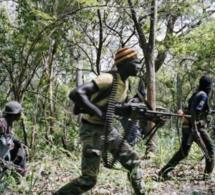 Arrestation suite au meurtre de 14 bûcherons dans la forêt de casamance.