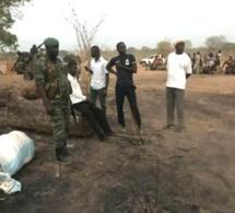 Trafic de bois: le Sénégal exerce un droit de poursuite en Gambie