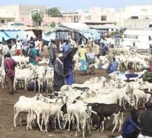 Tabaski 2018: « Fatick sera bien approvisionnée en moutons »