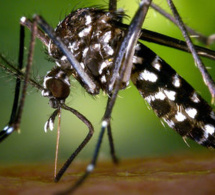 Dakar enregistre son premier cas de dengue