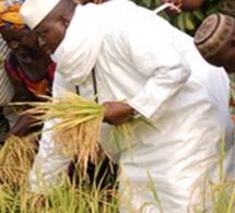 Découvrez la somme astronomique que Yayah Jammeh aurait volé en Casamance.