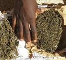 Pélérinage marial: 50kg de chanvre indien saisis à Popenguine