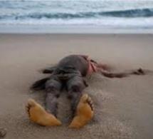 Malika: le corps d'un adolescent d'une quinzaine d'années, s'échoue sur la plage