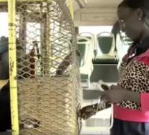Un receveur de bus Tata arrêté avec 52 cornets et 125 g de chanvre indien