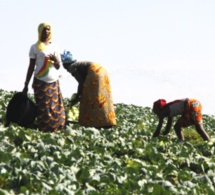 Toukar : Demba DIOUF et l'homme d'affaire Farba NGOM offrent un financement de 48 millions de CFA pour les femmes