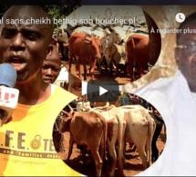 VIDEO: Le boucher de Cheikh Bethio pleure leur désarroi pour un Magal de Touba sans leur guide.