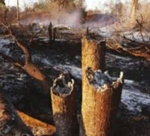 Incendie à Bandafassi: 17 cases et une mosquée du village de Thiankoumalal réduites en cendre