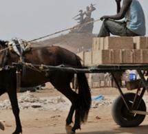 Braquage à Keur Massar : Quatre charretiers attaquent une bijouterie en plein jour