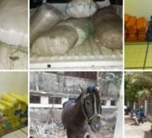 Trafic de drogue : La brigade des stupéfiants met la main sur 213 kilos de chanvre indien à Kaolack