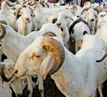 Tabaski 2020: Macky Sall demande une facilitation optimale de l'approvisionnement du pays en moutons
