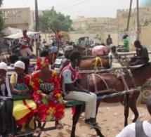 Magal 2020 : 40.000 charretiers attendus à Touba