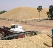 Commercialisation de l'arachide: faux départ de la campagne