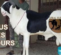 """""""Leral élevage"""", une nouvelle émission bientôt disponible sur Leral Tv"""