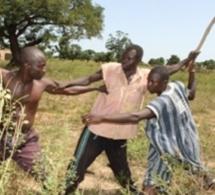 Alerte au Waalo : une vive tension notée entre paysans et éleveurs