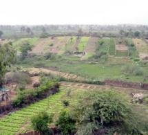 AGRICULTURE URBAINE: La zone des Niayes menacée
