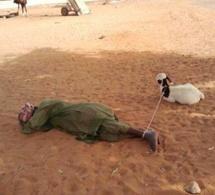 [PHOTO INSOLITE] Thieuy les peuls et leurs moutons!