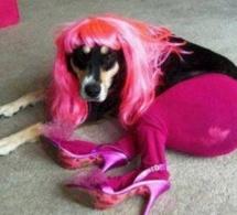 Ce chien qui s'appelle Lady Gaga...
