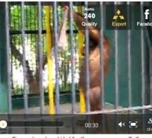 Vidéo: Un Singe vole un tee-shirt et l'enfile comme un humain (Regardez)