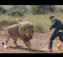 Insolite: Ce zoologiste qui joue au foot avec trois lions sauvages en pleine savane !- Vidéo