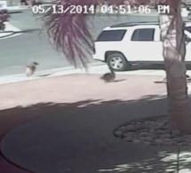 Vidéo: Le chat prend la défense d'un petit garçon attaqué par un chien (Incroyable)