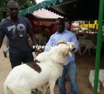 Opération tabaski: Tapha Marmite du cœur et Baboye dans la vente des béliers VIP