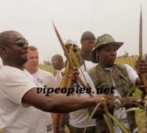 3 000 hectares de mil récoltés en moins de 48 heures: le défi du «dieuwrigne» de Khelcom, Cheikh Amar
