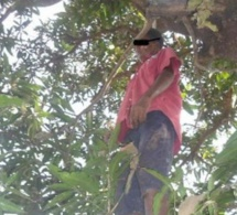 Séries de drames : Un homme retrouvé mort pendu à Louga, à Tamba un chauffeur mort carbonisé