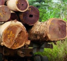 Trafic de bois sur fond de corruption : Le chef de poste de Keur Ayib tombe